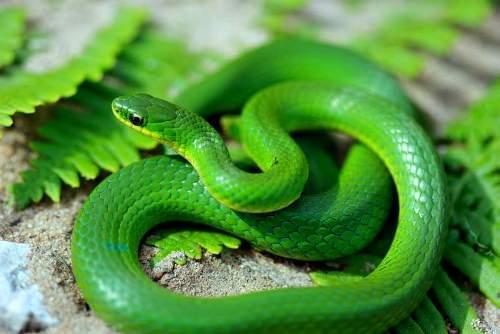 Kinh nghiệm phòng tránh và xử lý rắn độc cắn khi du lịch